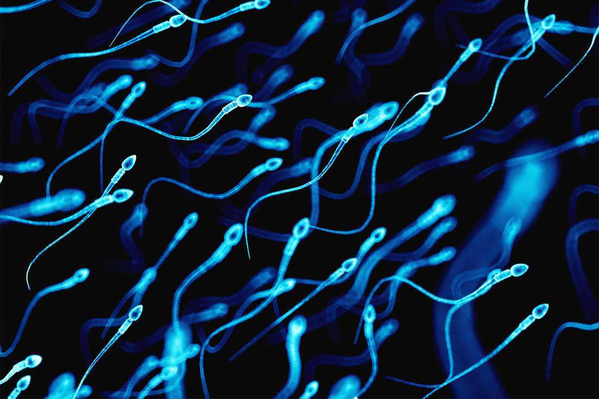 Discovered protein that promotes the compatibility between chromosomes after fertilization